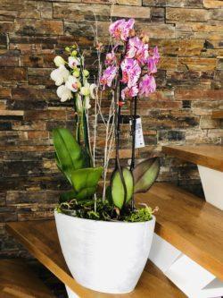 Atelier Floral 64 composition orchidées